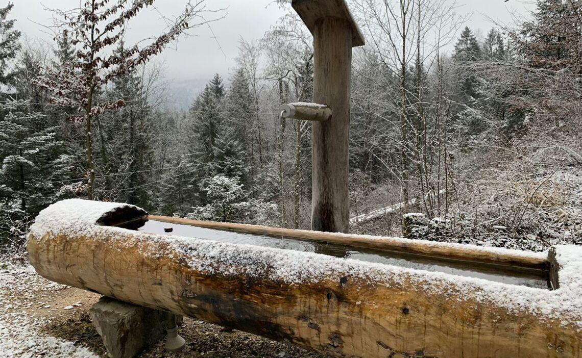 Der Wald-Idyll-Pfad