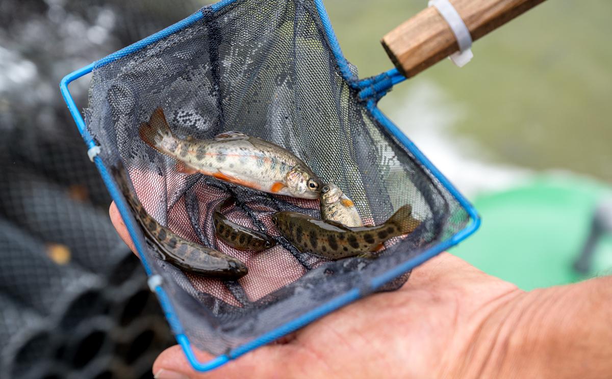 Fischzucht Alpenland 8