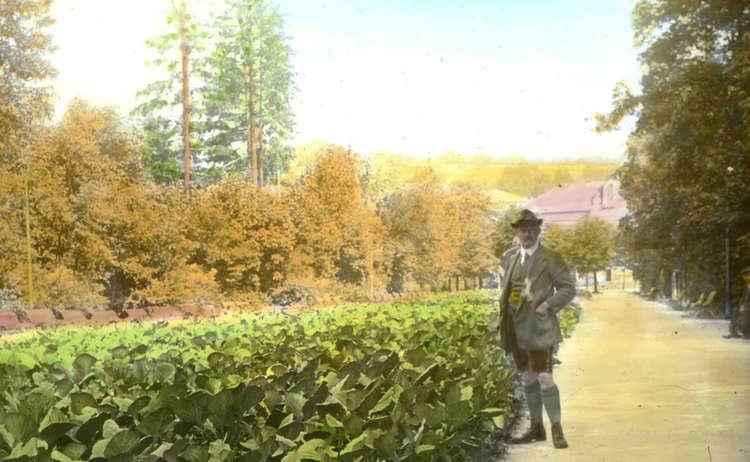Gemüseanbau 1917