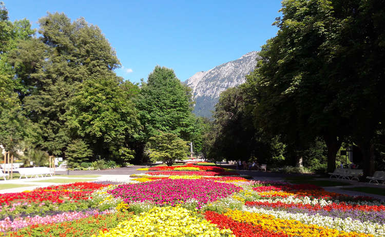 Koeniglicher Kurgarten Blumenmeer
