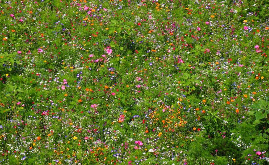 Blumenwiese am Salzstreuer-Kreisel
