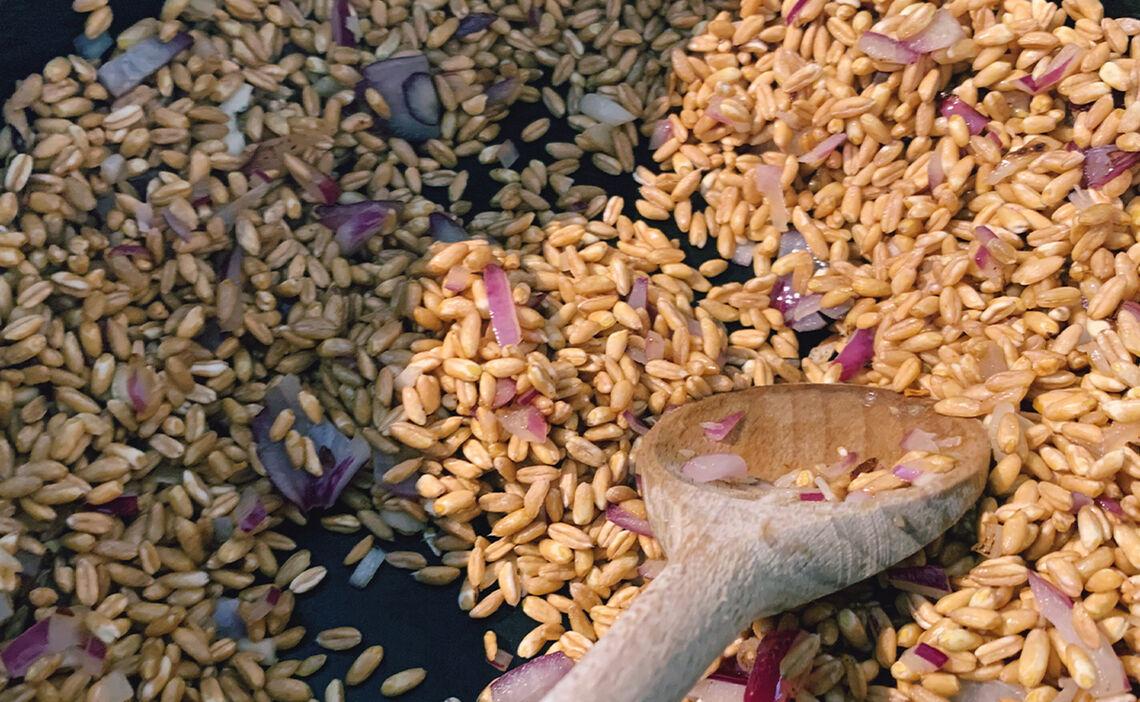 Perl-Getreide in die Pfanne