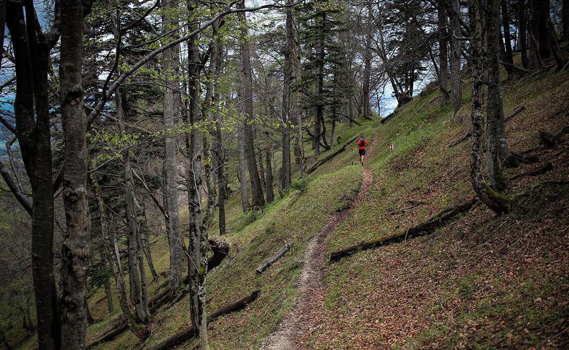 Trailrunning In Der Waeldern Der Alpenstadt Bad Reichenhall Philipp Reiter